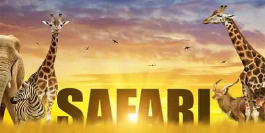 سافاری چیست : اجاره خونه- آپارتمان مبله