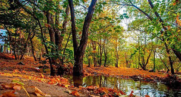 بوستان جنگلی چیتگر کجاست|آدرس پارک چیتگر با مترو