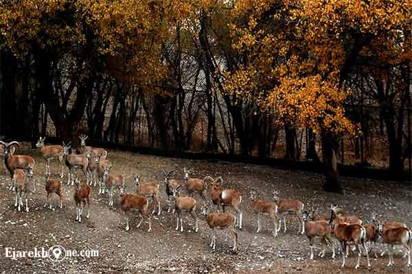 بوستان چیتگر تهران|اجاره خونه