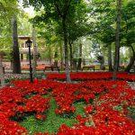بوستان باغ ایرانی ده ونک - باغ ایرانی لاله ها:اجاره خونه